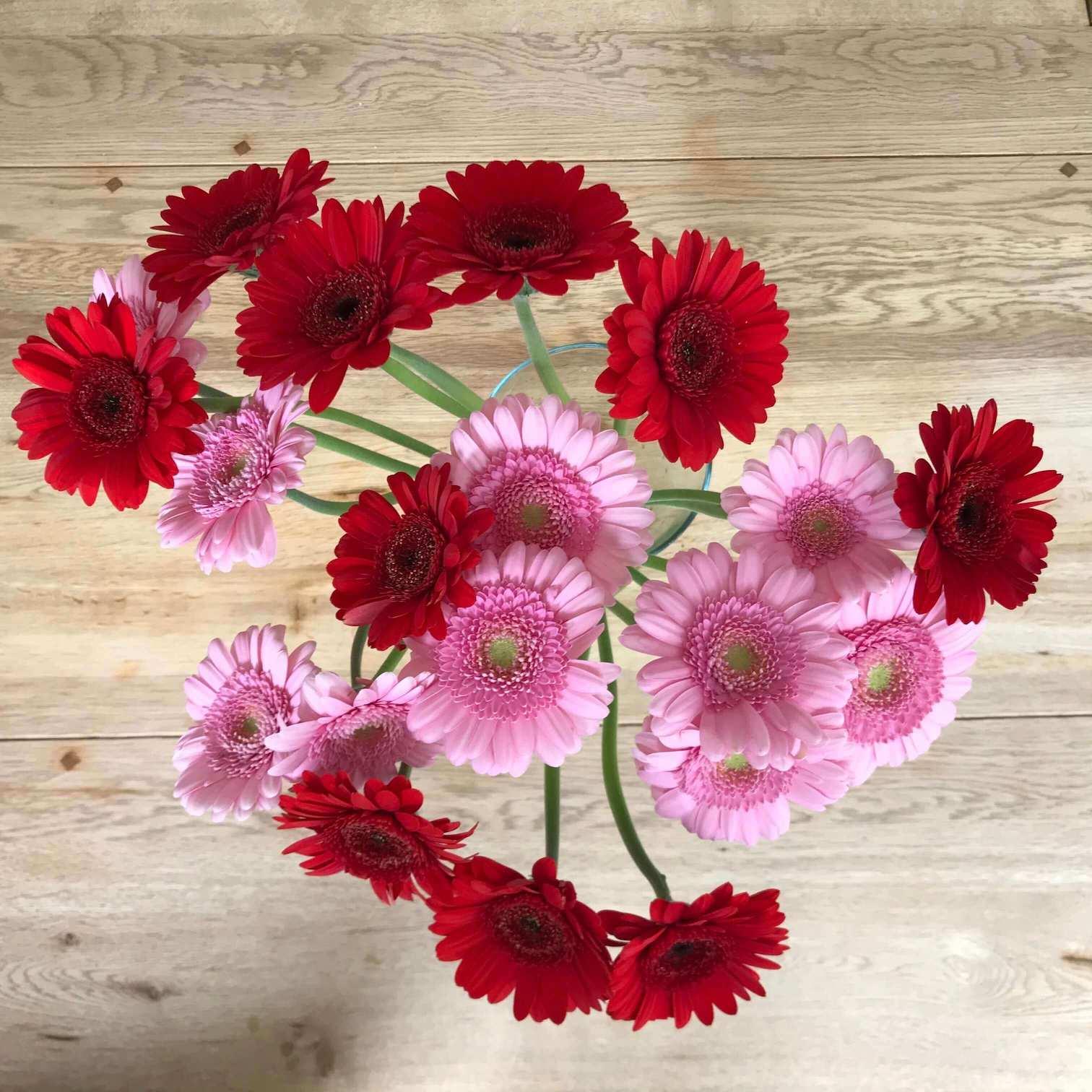 20 Geberas (meine Lieblingsblumen) zu 20 Jahren Beziehung. Seit Mai 2001 sind mein Mann und ich ein Paar. 20 rote und rosafarbene Geberas in einer Glasvase.
